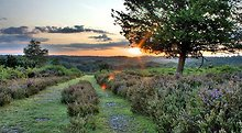 Hotels in New Forest