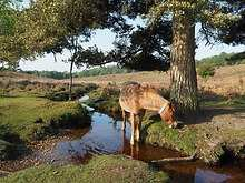 Hotels in Hampshire & The New Forest
